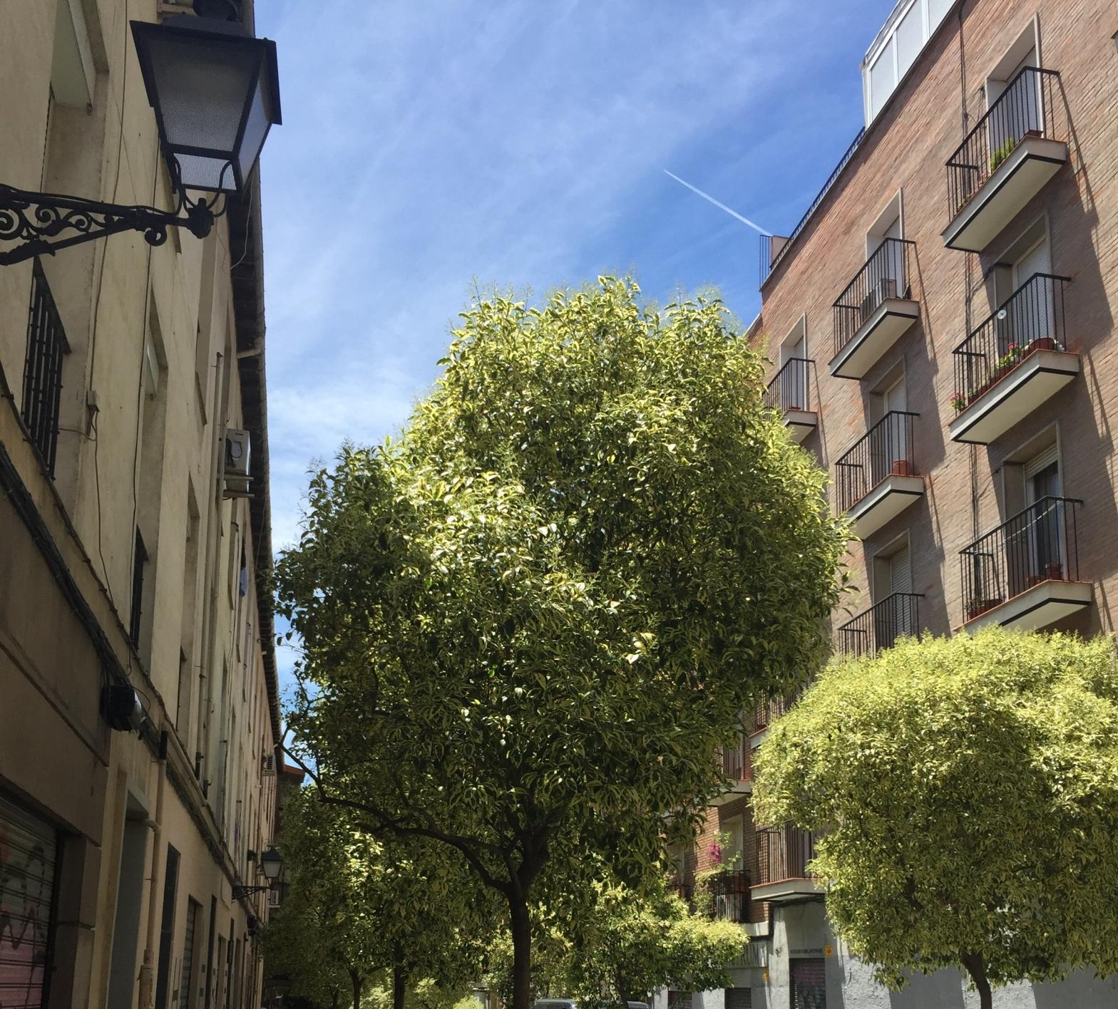 Madrid's street